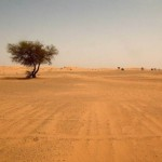 United Nations: Morocco Calls for International Solidarity to Fight Desertification