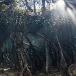Saudi women passionate about saving Saudi mangroves