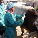 Breaking taboos, Qatari female vet forges her own career path