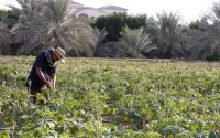 Organic and proud: a healthy approach to farming in the UAE