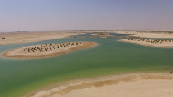 The region's largest manmade forest is coming up in Qatar's desert