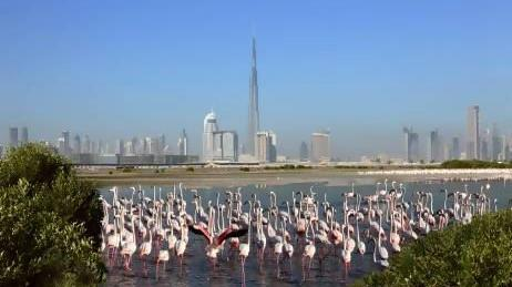 Dubai to host 1,000 wetlands experts at global forum
